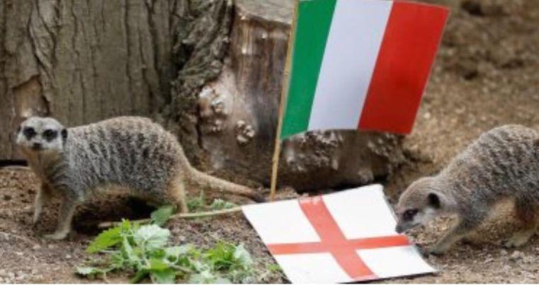 """السرقاط"""" يتوقع فوز إنجلترا  في نهائي يورو 2020"""