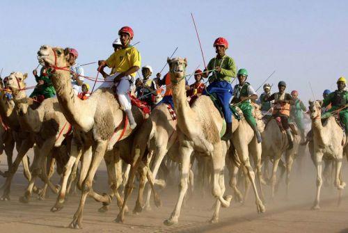 تنظيم اكبر مهرجان لسباق الهجن بين قبائل شمال كردفان والنيل الابيض